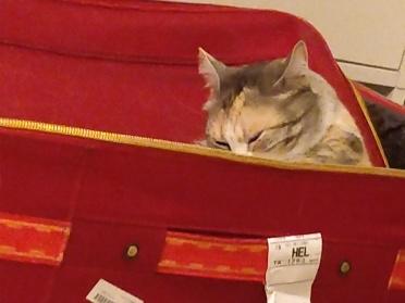 g matkalaukussa